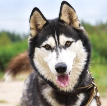 Балтия - Собаки в добрые руки