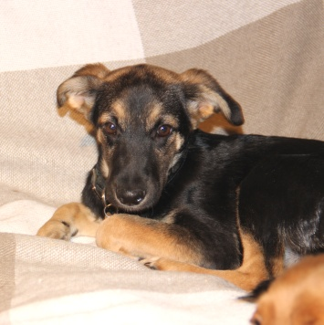 Добродушка Геля - Собаки в добрые руки