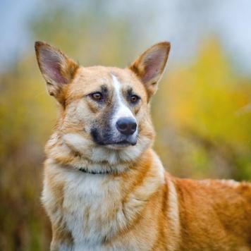 Сидней - Собаки в добрые руки