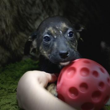 Джун - Собаки в добрые руки