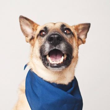 Марьяна - Собаки в добрые руки