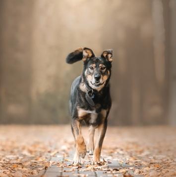 Борман - Собаки в добрые руки
