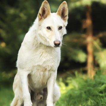 Азор - Собаки в добрые руки