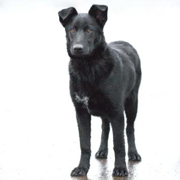 Басма - Собаки в добрые руки