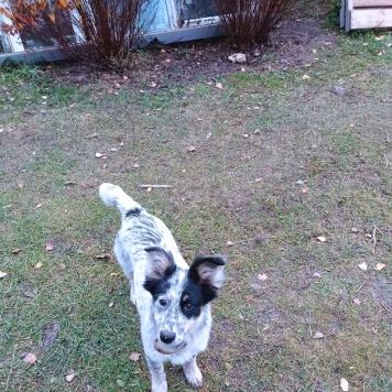 Рябик - Собаки в добрые руки