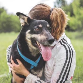 Лакрица - Собаки в добрые руки