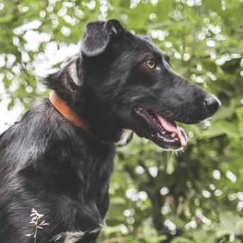 Сажа - Собаки в добрые руки