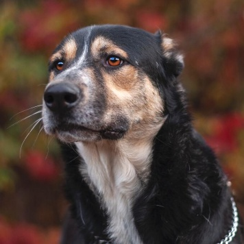 Вайгар - Собаки в добрые руки