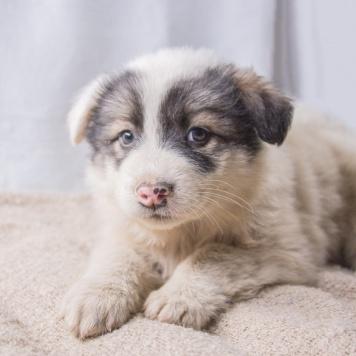 Вьюга - Собаки в добрые руки