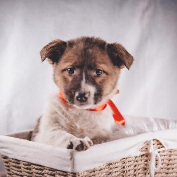 Вирга - Собаки в добрые руки