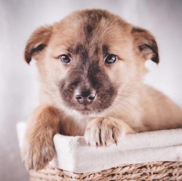Гром - Собаки в добрые руки