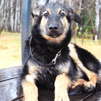 Джес - Собаки в добрые руки