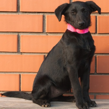 Миа - Собаки в добрые руки