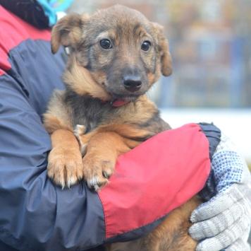 Руна - Собаки в добрые руки