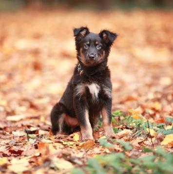 Сита - Собаки в добрые руки