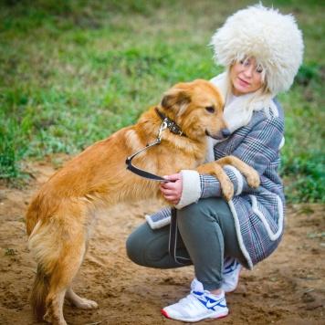 Барбарискин - Собаки в добрые руки