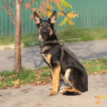 Крафт - Собаки в добрые руки