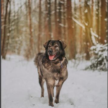Амина - Собаки в добрые руки