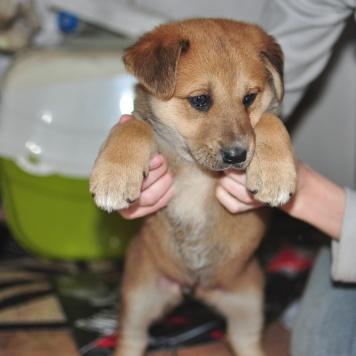 Ширли - Собаки в добрые руки
