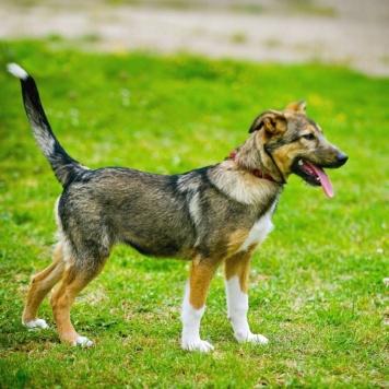 Флафи - Собаки в добрые руки