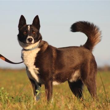 Тэя - Собаки в добрые руки