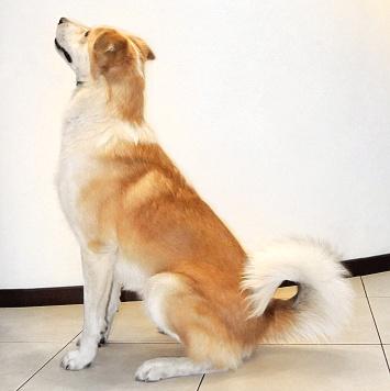 Шанхай - Собаки в добрые руки
