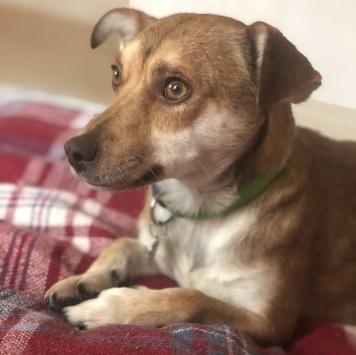 Джулия - Собаки в добрые руки