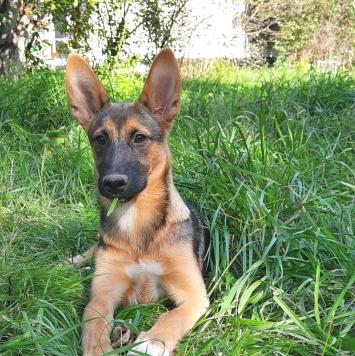 Лана - Собаки в добрые руки