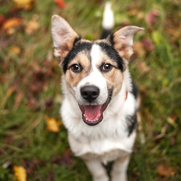Майлс - Собаки в добрые руки