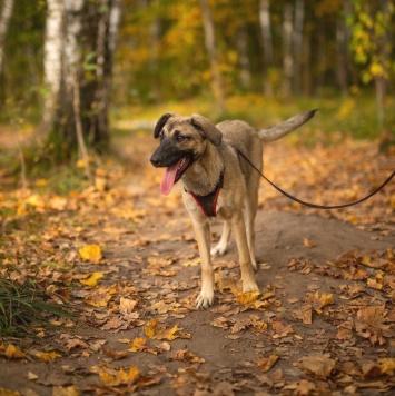 Амая - Собаки в добрые руки