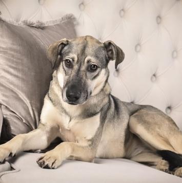 Одри - Собаки в добрые руки