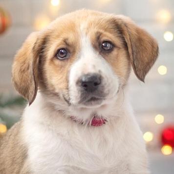 Джейн - Собаки в добрые руки