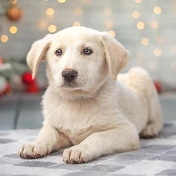 Клео - Собаки в добрые руки