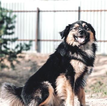 Лемур - Собаки в добрые руки