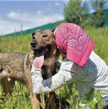 Чупа-Чупс - Собаки в добрые руки