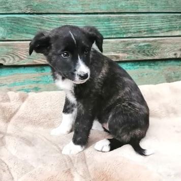 Пумба - Собаки в добрые руки