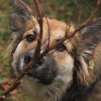 Малибу - Собаки в добрые руки