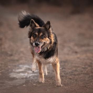 Вивьен - Собаки в добрые руки