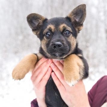 Пина - Собаки в добрые руки