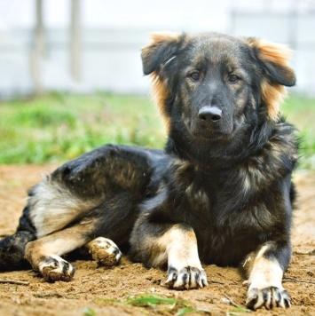 Шани - Собаки в добрые руки