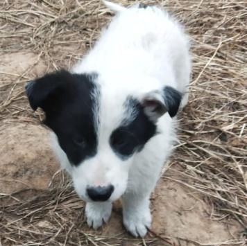 Каспер - Собаки в добрые руки