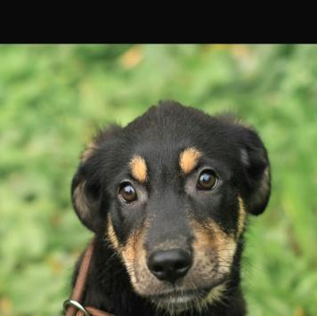 Спокойный и умный Шарм - Собаки в добрые руки