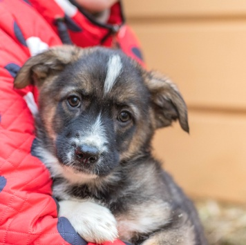 Крошка Тимати - Собаки в добрые руки