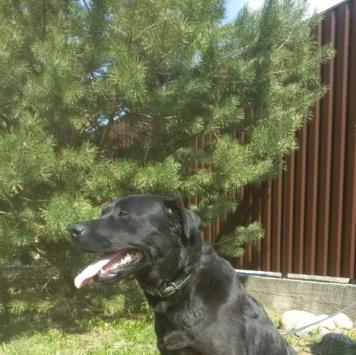 Варюша - Собаки в добрые руки