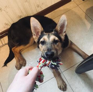 Симон - Собаки в добрые руки