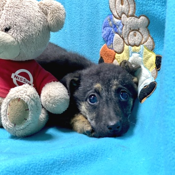 Зоя - Собаки в добрые руки
