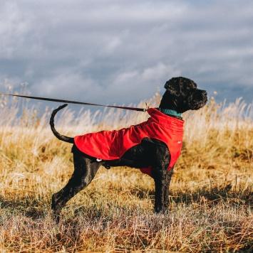 Черный терьер - Собаки в добрые руки