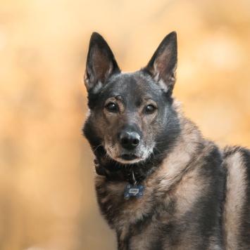 Серик - Собаки в добрые руки