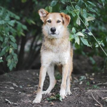 Соло - Собаки в добрые руки