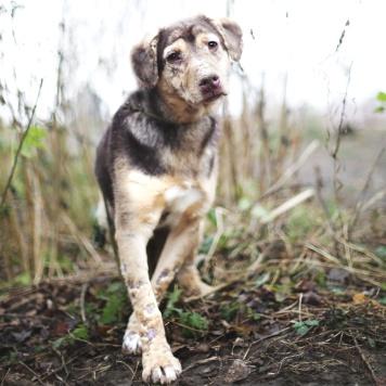Тоффи - Собаки в добрые руки